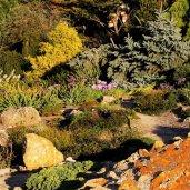 Ogródek skalny